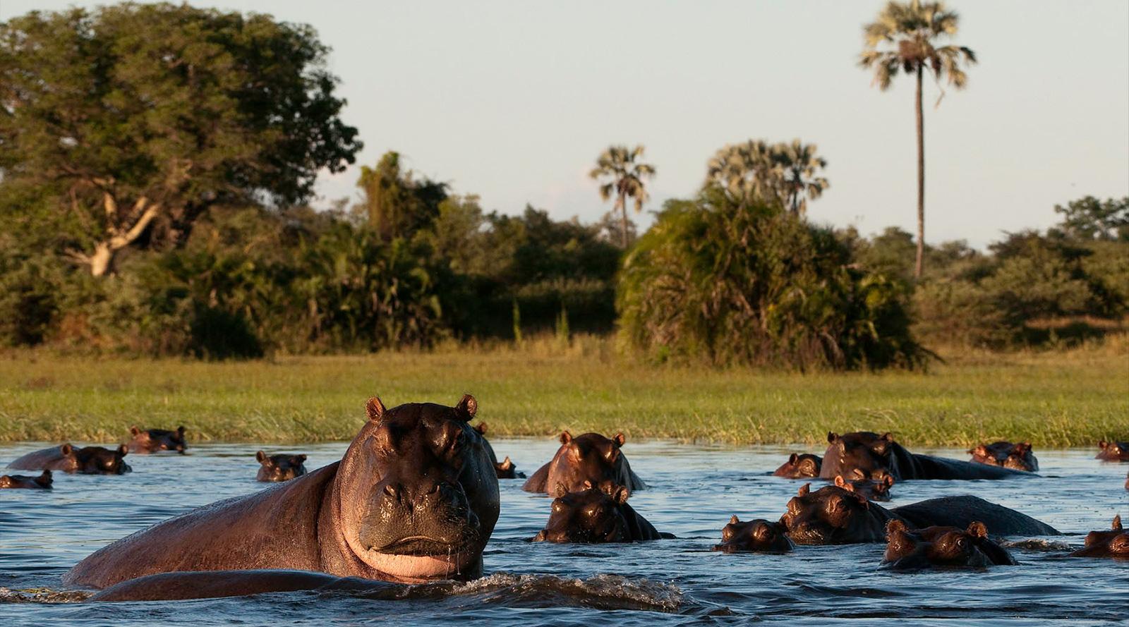© Wilderness Safaris | Mombo