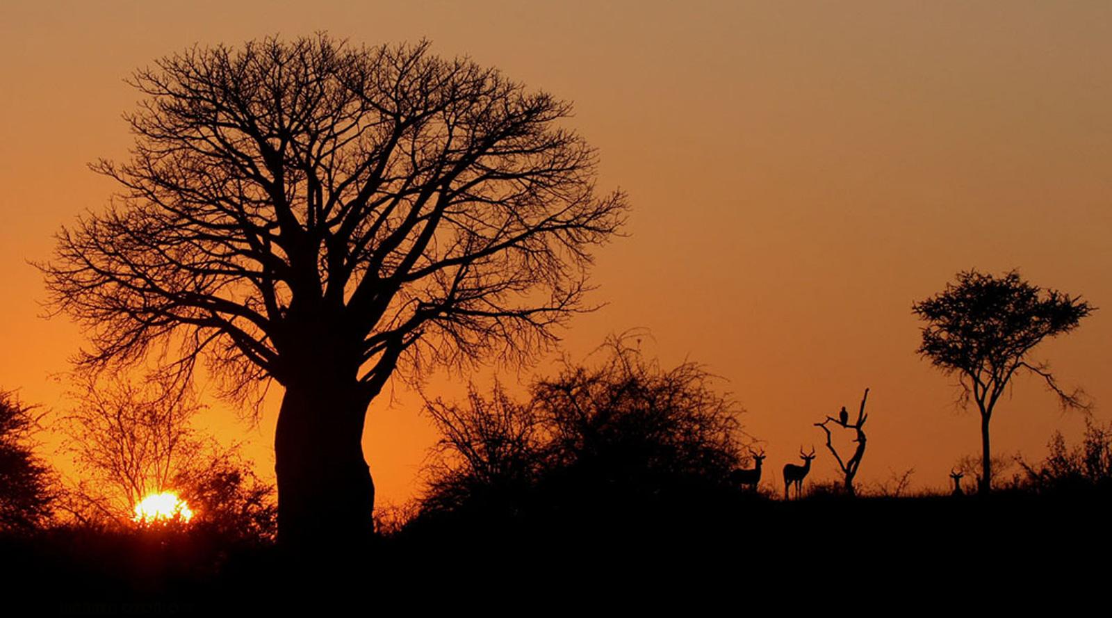 © Wilderness Safaris | Pafuri, Sudafrica
