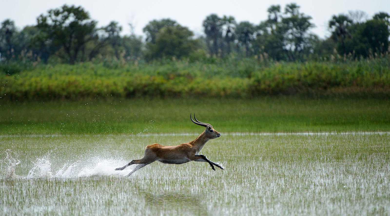 © Wilderness Safaris | Tubu Tree Camp