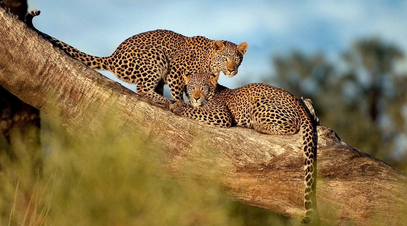 © Wilderness Safaris | Seba Camp