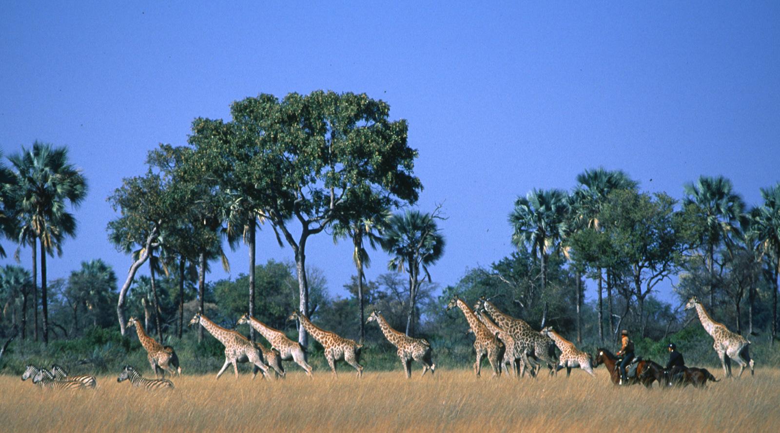 © Okavango Horse Safaris