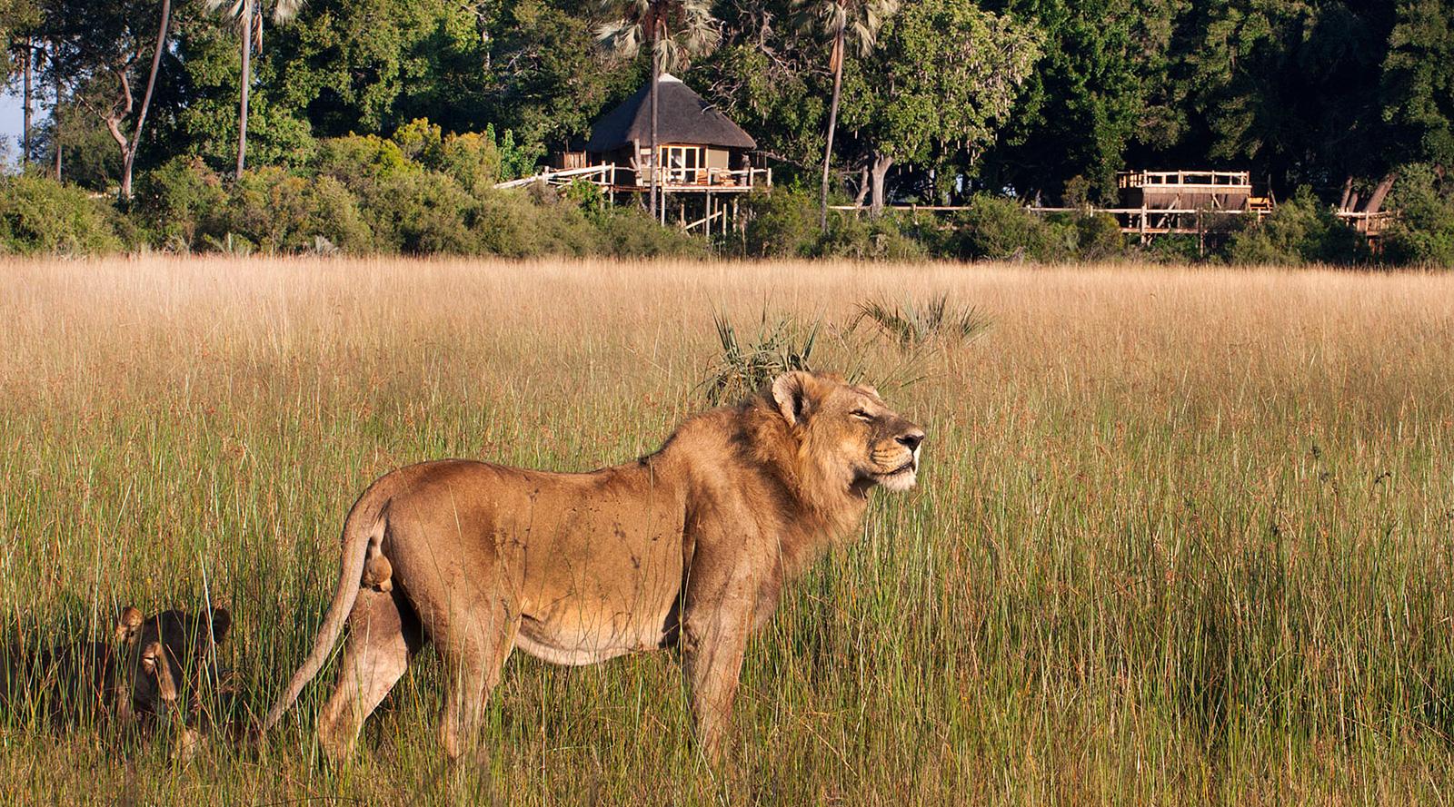 © Wilderness Safaris   Tubu Tree Camp, Botswana