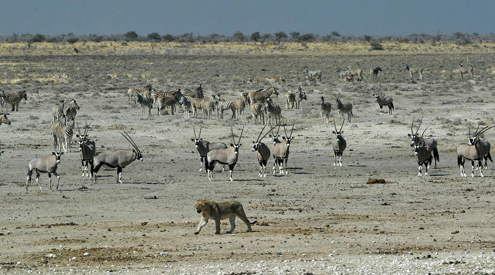 © Wilderness Safaris | Etosha National Park, Namibia