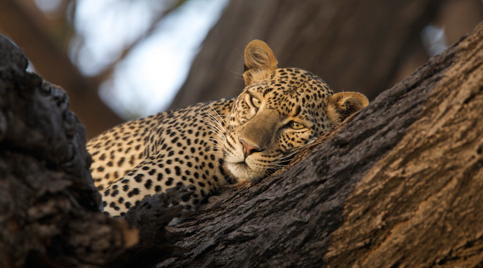 © Joy's Camp | Joy's Camp, Kenya