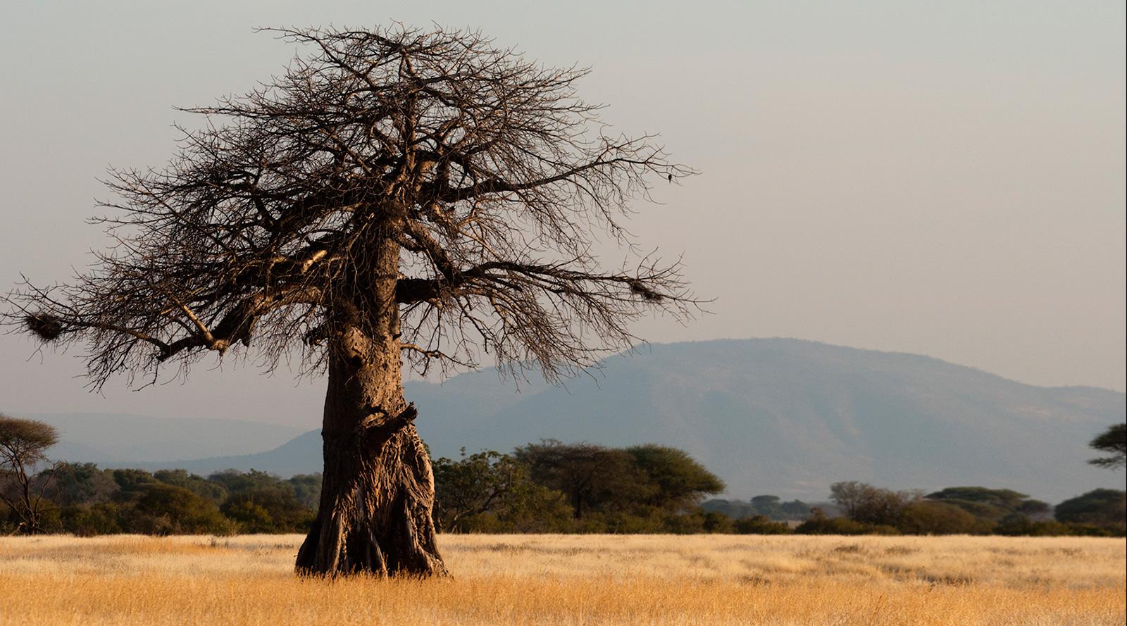 © Pietro Luraschi | Ruaha National Park, Tanzania