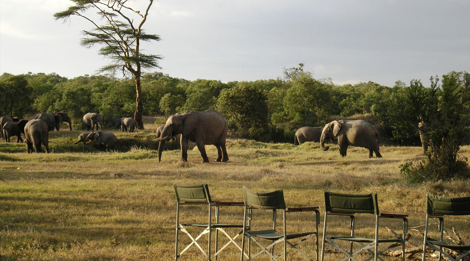 © O.P. Bush Camp   O.P. Bush Camp, Kenya