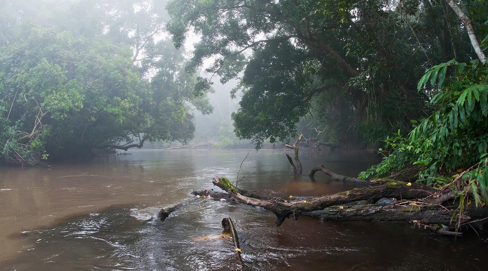 © Wilderness Safaris | Odzala, Congo