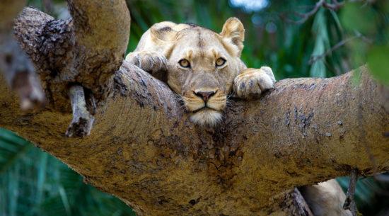 Safari classico – Big 5