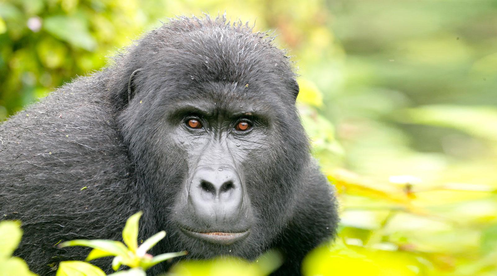 © Benedetta Mazzini | Uganda, Bwindi National Park