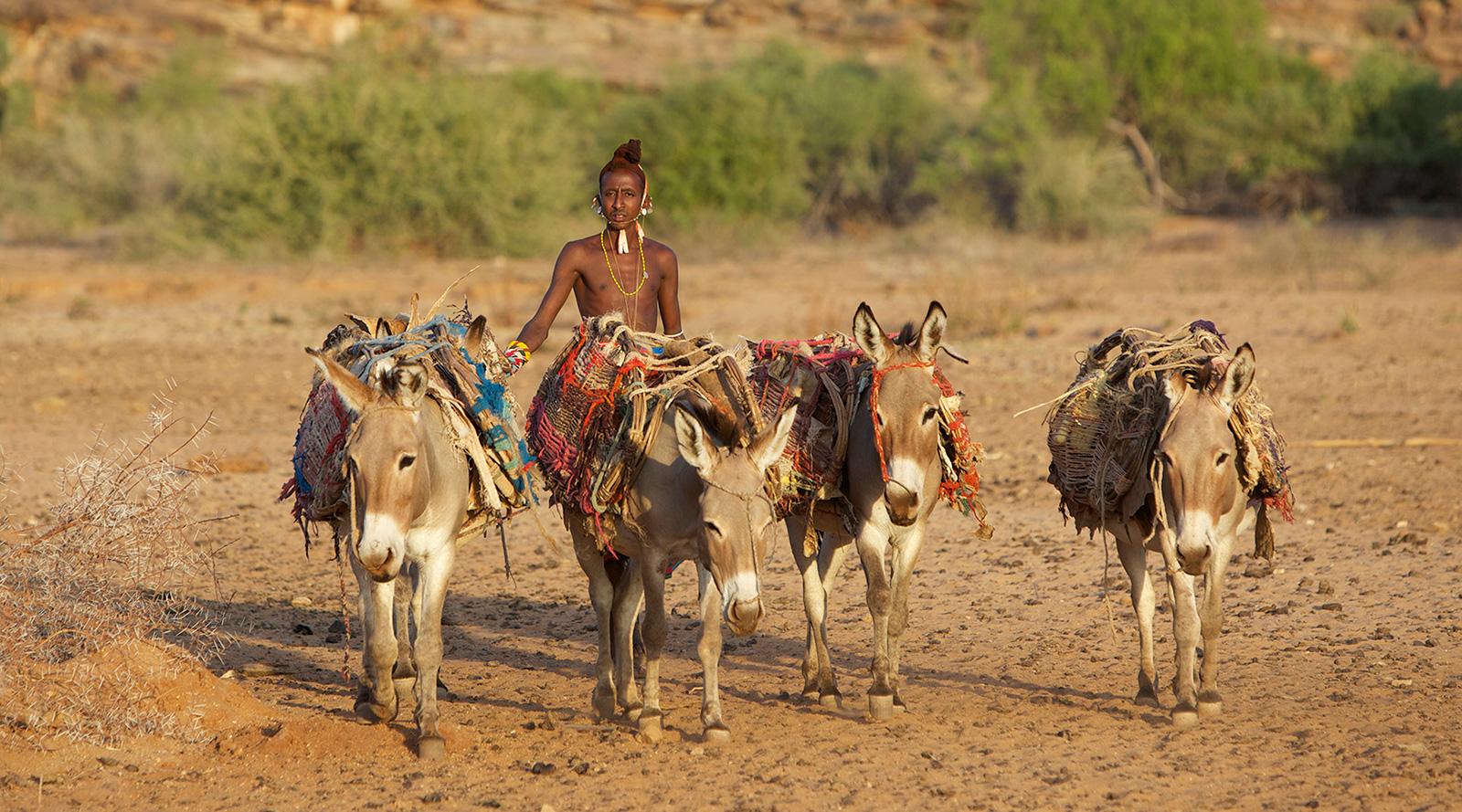 © Roberts Safaris