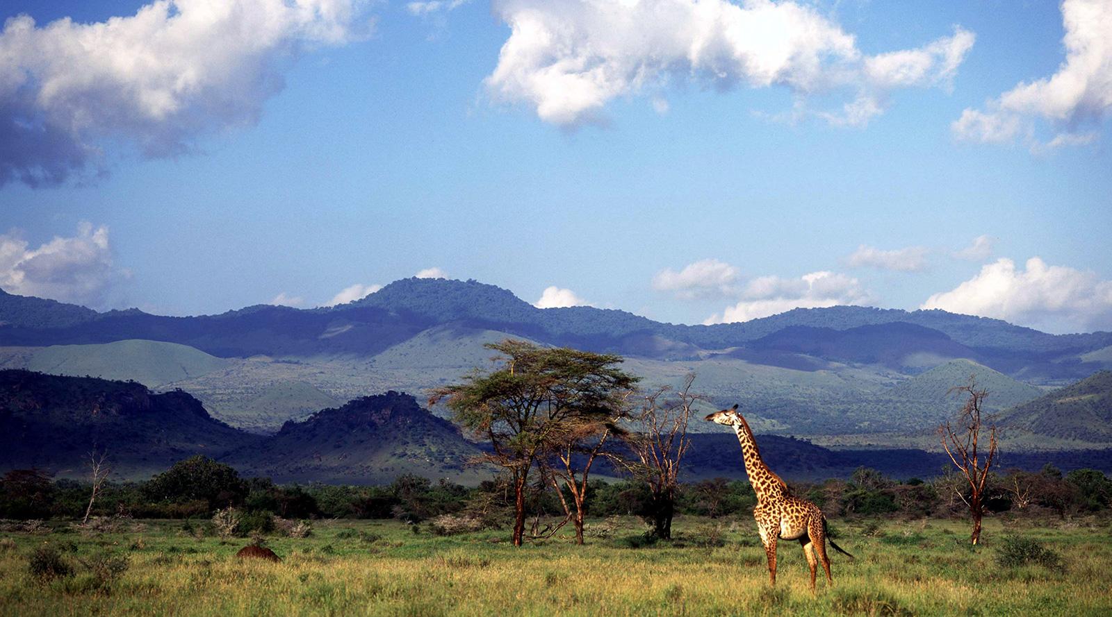 © Campi ya Kanzi | Campi Ya Kanzi, Chyulu Hills, Kenya
