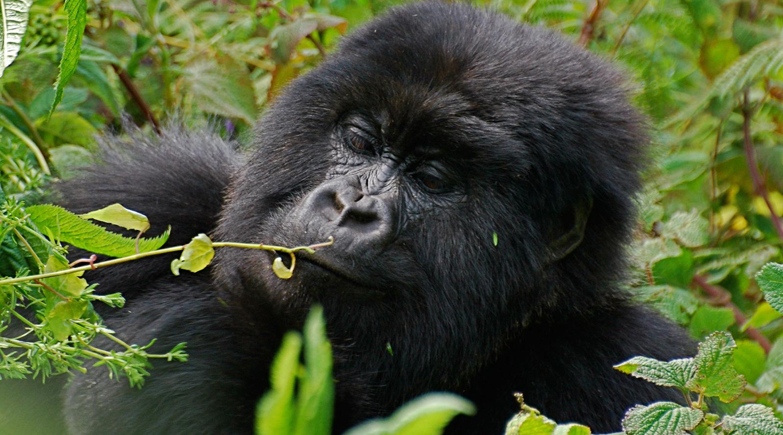 © N. Contos | Rwanda, Volcanoes National Park