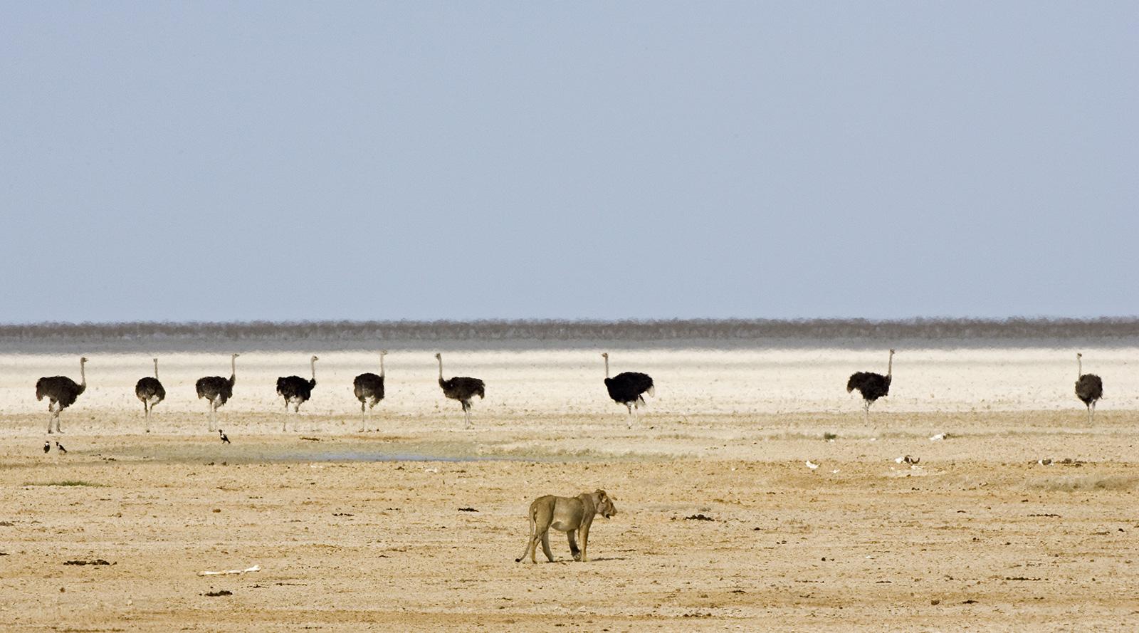 © Wilderness Safaris | Etosha, Namibia