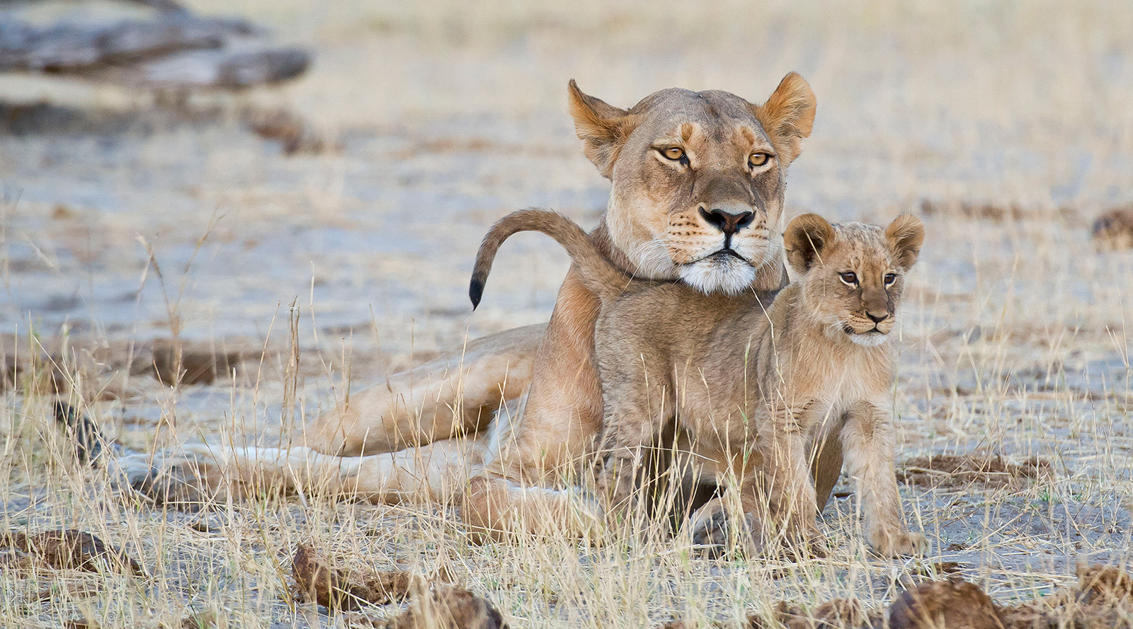 © Wilderness Safaris