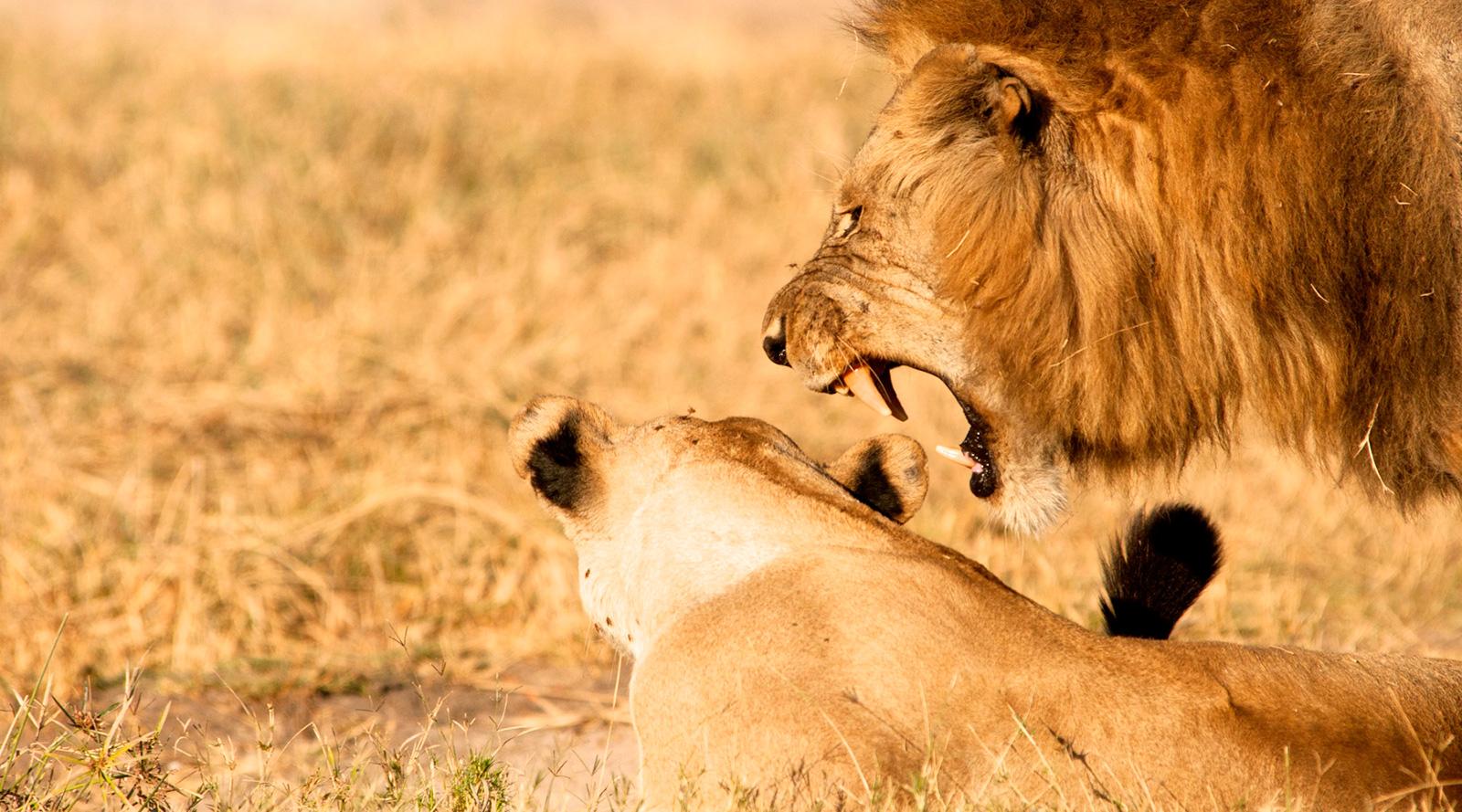 © Pietro Luraschi | Tanzania