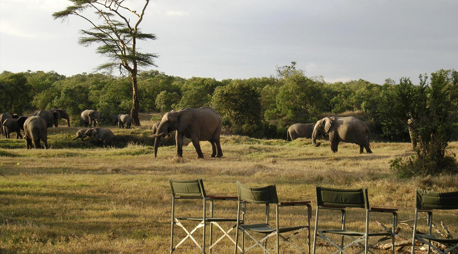 © O.P. Bush Camp | O.P. Bush Camp, Kenya