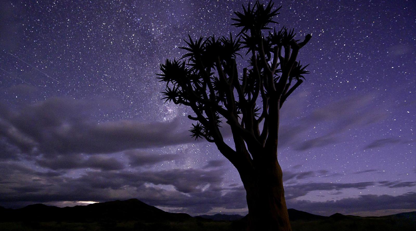 © Wilderness Safaris