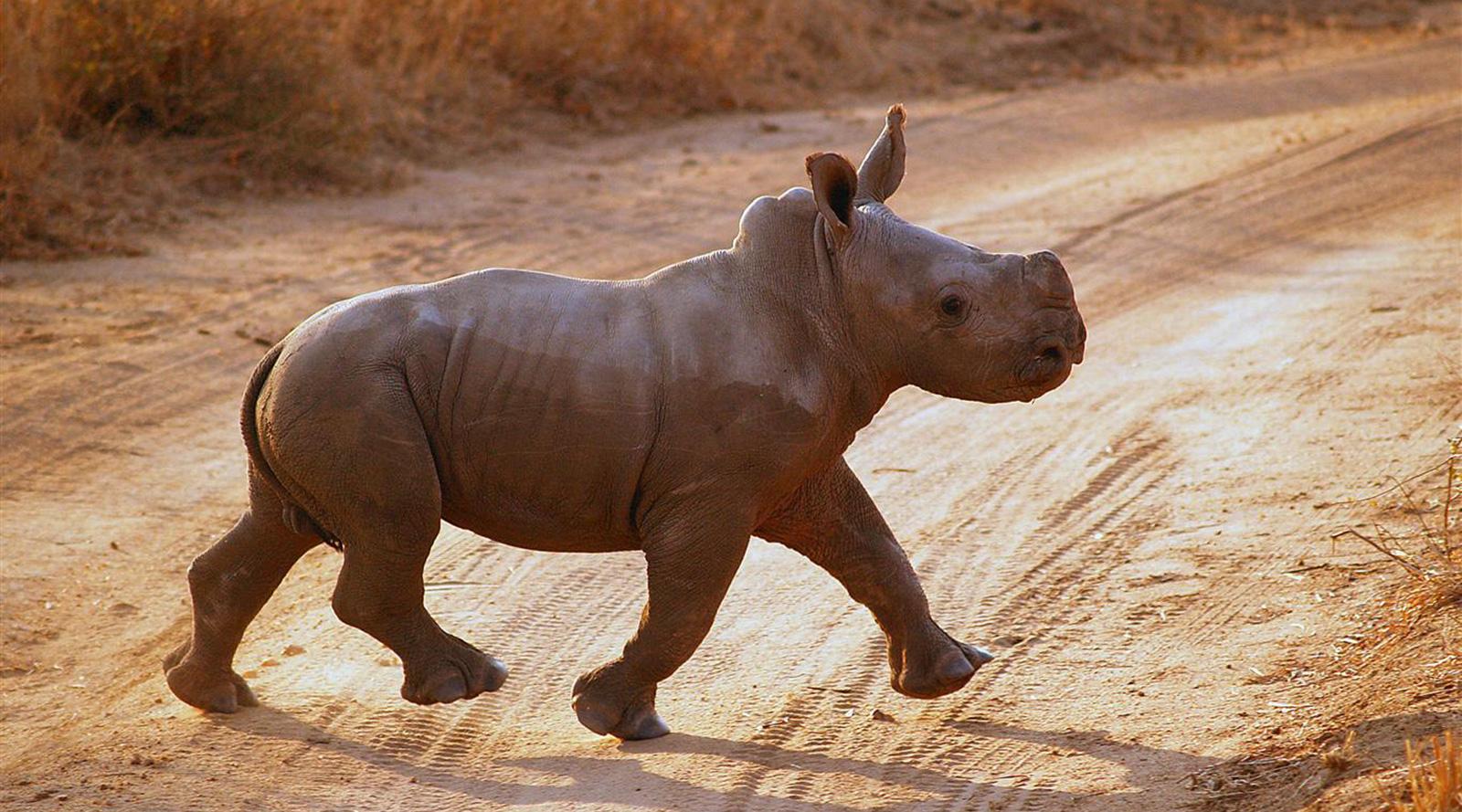 © Tswalu | Kalahari