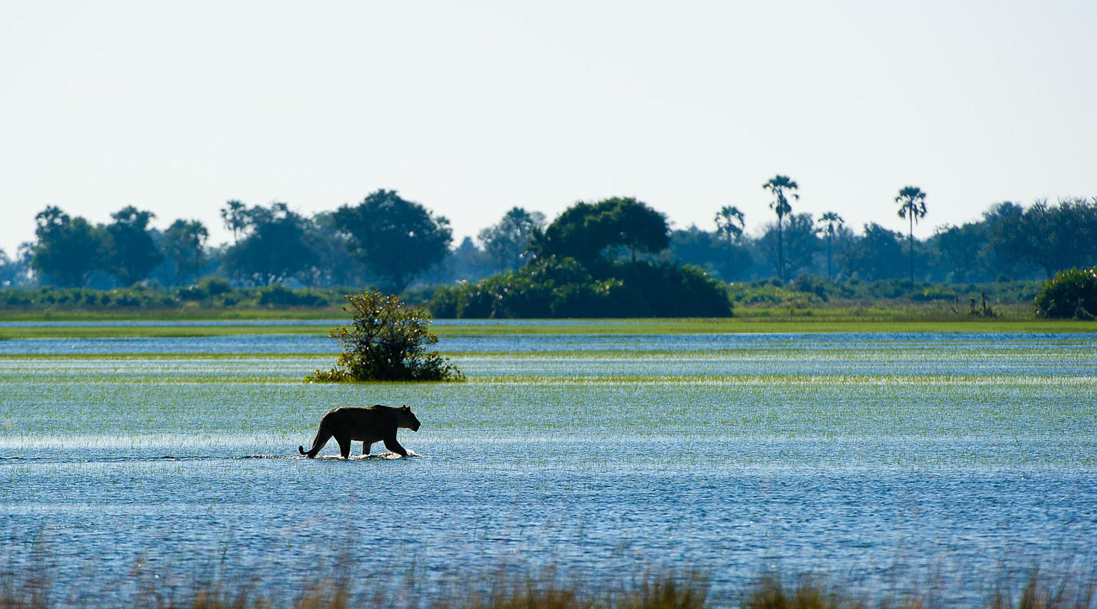 © Wilderness Safaris | Okavango Delta, Botswana